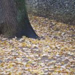 autumn leaves on ground Winchester