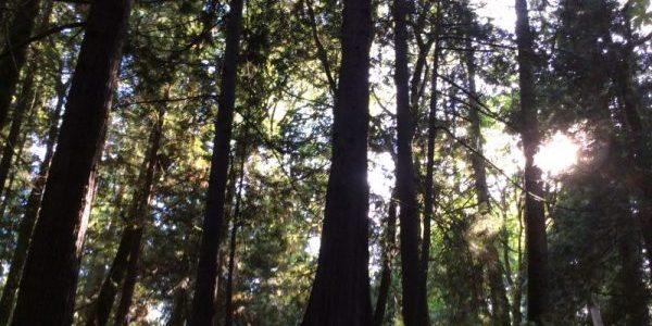 Chuckanut Drive woods, Bellingham, Washington USA, by Ana Gobledale