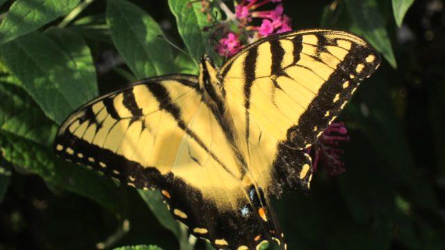 butterfly, North Carolina — Ana Gobledale
