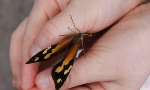 Butterfly — Kerry Handasyde, Australia