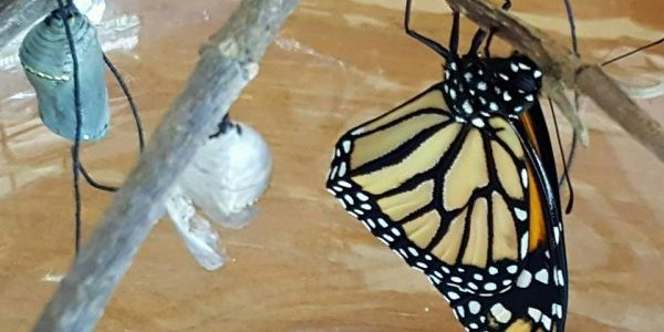 Butterfly born! — Kathy Schultz, Australia