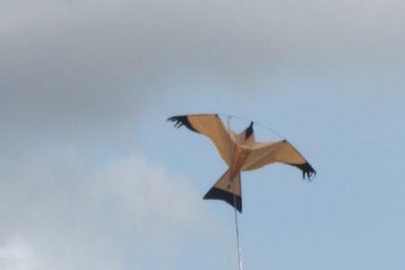 Bird kite, Bristol
