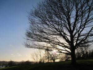 winter tree, Kent UK -- photo by Ana Gobledale