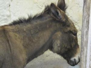 Donkey, Carisbrooke Castle, Isle of Wight UK -- Ana Gobledale