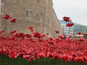 Remembrance poppies, Tower of London, UK -- Ana Gobledale
