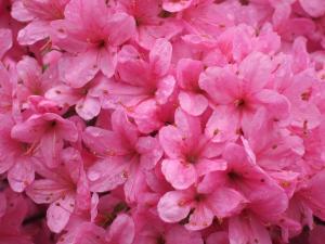 Flowers, UK