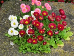 Flowers, UK -- Ana Gobledale