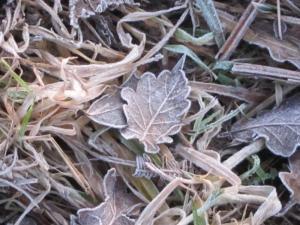 frosty morning, Cumbria UK -- Ana Gobledale