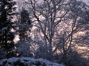 sunrise winter -- photo by Ana Gobledale