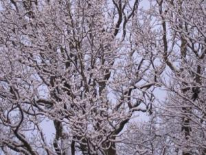 Icy trees in Windermere -- photo by Ana Gobledale