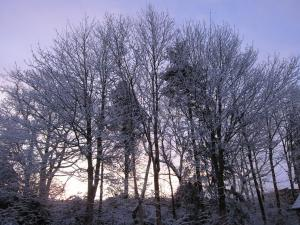 winter morning light, Cumbria UK -- photo by Ana Gobledale