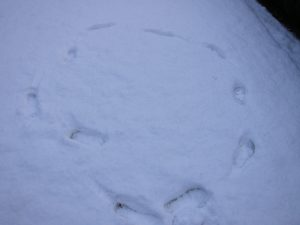 footprint circle-- photo by Ana Gobledale