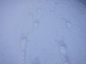 Footprints in the snow-- photo by Ana Gobledale