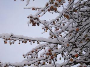 snowfall at Windermere with berries -- Ana Gobledale UK