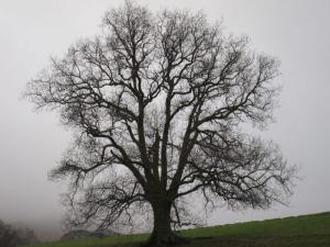 Misty Cumbria -- Ana Gobledale