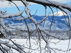 Snowy boughs mountains, Deborah Norris and Linda Sheeran, Colorado USA