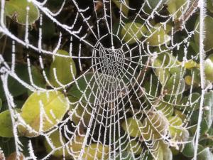 frost-laced web -- photo by Ana Gobledale