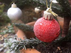 frosty baubles -- photo by Ana Gobledale