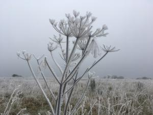 frosty flowers -- photo by Ana Gobledale
