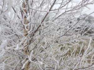 frosty tree -- photo by Ana Gobledale