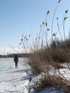 Wisconsin winter grasses - Thandiwe Dale-Ferguson